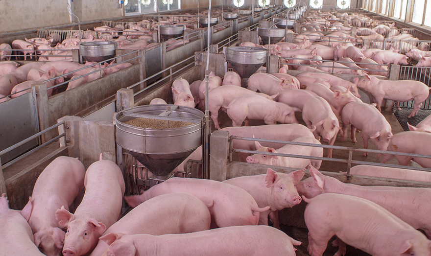 African Swine Fever virus impacts U.S. dairy ingredient exports to Asia